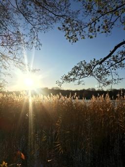 Recension: Till dikten